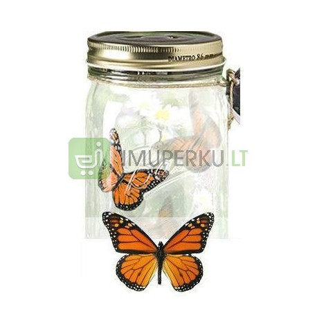 Butterfly in a jar - Wanderer
